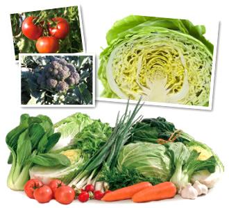 渥美半島の野菜