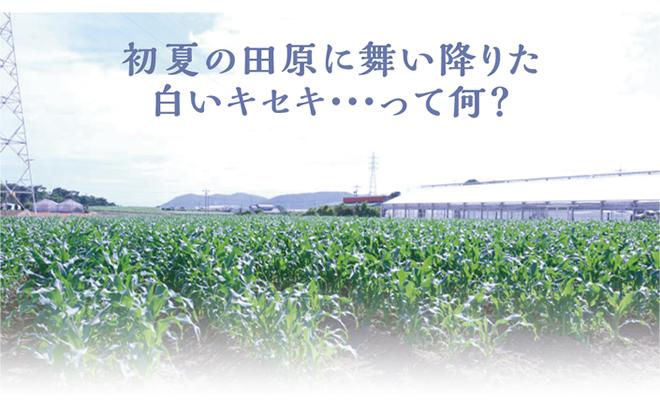 初夏の田原に舞い降りた白いキセキ・・・って何?